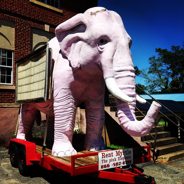 Pink elephant sighting in Spartanburg, SC.